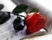 وردة حمراء - صورة أرشيفية