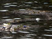 تلوث نهر النيل - أرشيفية