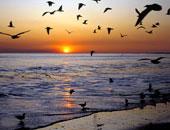 الصيد الجائر للطيور المهاجرة - صورة أرشيفية