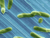 بكتيريا – أرشيفية