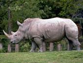 وحيد القرن - أرشيفية