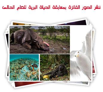 ننشر الصور الفائزة بمسابقة الحياة البرية للعام الحالى