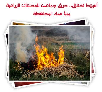 أسيوط تختنق.. حرق جماعى للمخلفات الزراعية يملأ سماء المحافظة