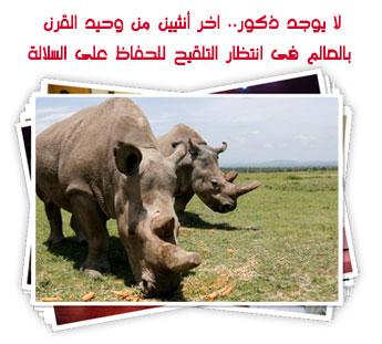 لا يوجد ذكور.. اخر أنثيين من وحيد القرن بالعالم فى انتظار التلقيح للحفاظ على السلالة