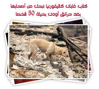 كلاب غابات كاليفورنيا تبحث عن أصحابها بعد حرائق أودت بحياة 50 شخصا