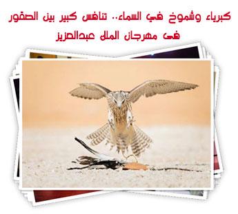 كبرياء وشموخ في السماء.. تنافس كبير بين الصقور فى مهرجان الملك عبدالعزيز