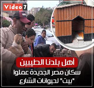 """رحمة المصريين.. سكان مصر الجديدة بنوا """"بيت"""" لكلاب الشارع"""
