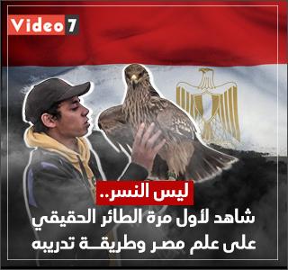 ليس النسر.. شاهد لأول مرة الطائر الحقيقى على علم مصر وطريقة تدريبه