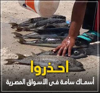 احذروا.. أسماك سامة بالأسواق المصرية