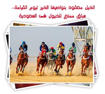 سباق ممتع للخيول فى السعودية