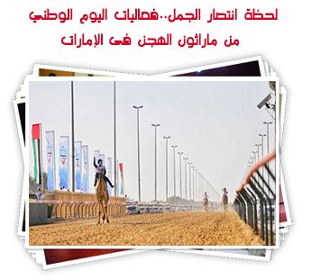 لحظة انتصار الجمل..فعاليات اليوم الوطني من ماراثون الهجن فى الإمارات