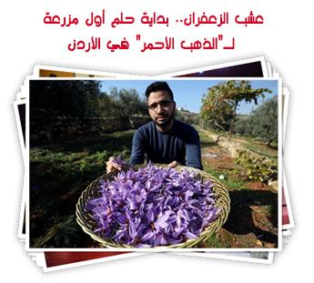 """عشب الزعفران.. بداية حلم أول مزرعة لـ""""الذهب الأحمر"""" في الأردن"""