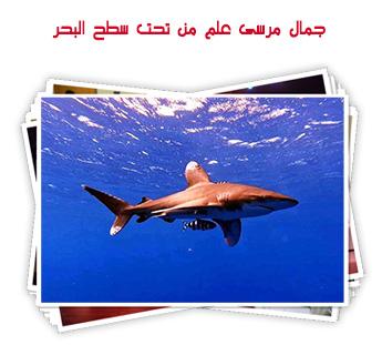 جمال مرسى علم من تحت سطح البحر