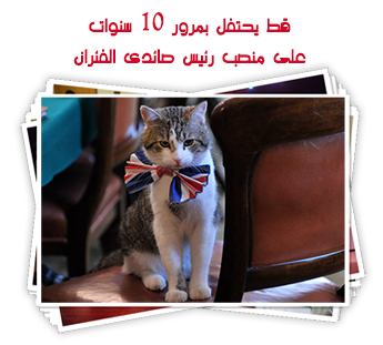 قط يحتفل بمرور 10 سنوات على منصب رئيس صائدى الفئران