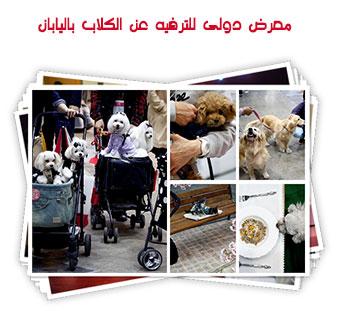 معرض دولى للترفيه عن الكلاب باليابان