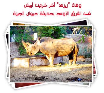 """وفاة """"زيزى"""" آخر خرتيت أبيض فى الشرق الأوسط بحديقة حيوان الجيزة"""