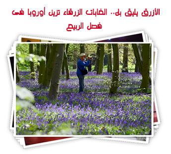 الأزرق يليق بك.. الغابات الزرقاء تزين أوروبا فى فصل الربيع