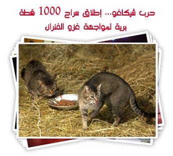 حرب شيكاغو... إطلاق سراح 1000 قطة برية لمواجهة غزو الفئران