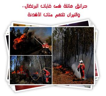 حرائق هائلة فى غابات البرتغال.. والنيران تلتهم مئات الأفدنة