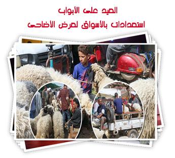 العيد على الأبواب.. استعدادات بالأسواق لعرض الأضاحى
