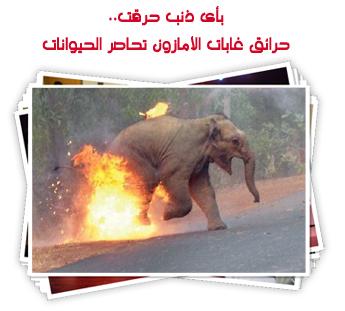بأى ذنب حرقت.. حرائق غابات الأمازون تحاصر الحيوانات