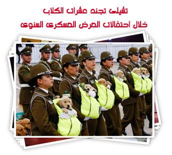 تشيلى تجند عشرات الكلاب خلال احتفالات العرض العسكرى السنوى فى تشيلى