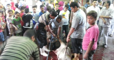 انتشار مخلفات الذبح بشوارع القاهرة والجيزة رغم فتح المجازر مجانًا