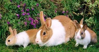 Rabbit meat is the key to the health of your heart and bones.. Know why