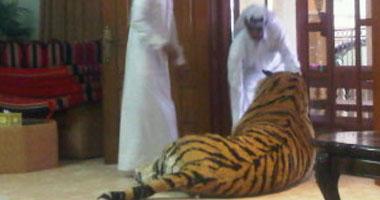 نمر هارب يثير الذعر في العاصمة القطرية 11020102923280