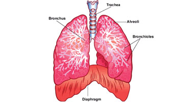 ما هو مرض السدة الرئوية المزمنة؟
