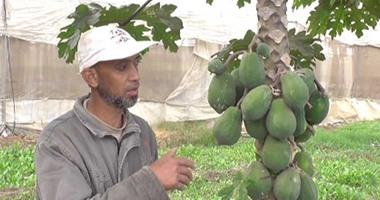 الزراعة: حزمة إرشادية لـ6 محاصيل فاكهة لمقاومة الأمراض والثمار المتساقطة