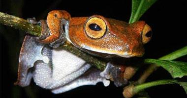 أغرب عشرة كائنات حية تم اكتشافها في 2011 11220112182552.jpg