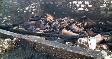 الحماية المدنية بسوهاج تسيطر على حريق بحوش للمواشى بقرية عنيبس بمركز جهينة دون إصابات