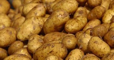 وزير الزراعة يبحث اليوم مع وفد روسى إجراءات صادرات البطاطس المصرية لموسكو