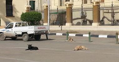 سكان شارع نهرو فى مصر الجديدة يطالبون بتدخل الحى لمواجهة الكلاب الضالة