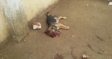 العثور على 3 كلاب مذبوحة داخل مدرسة السيدة خديجة فى السويس
