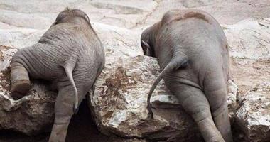 بوتسوانا تتعاقد مع شركة هوليوودية لتحسين صورتها بسبب صيد الفيلة