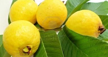 الزراعة تضع 8 اشتراطات لتصدير الجوافة والرمان.. تعرف عليها