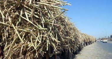 مزارعو قصب السكر ونواب قنا يدعون لمناقشة أزمة التوريد