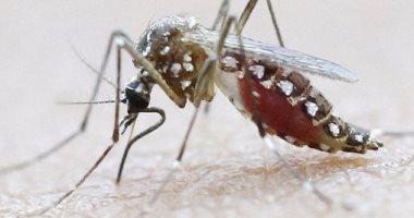 أطباء يطالبون بمعايير عالمية لتشخيص فيروس زيكا