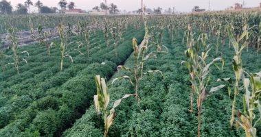 الفاو تحذر: الآفات تؤثر على النباتات وبدونها سنفقد 80% من الغذاء العالمى