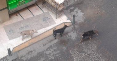 الكلاب الضالة تهدد سكان شارع النعام بعين شمس