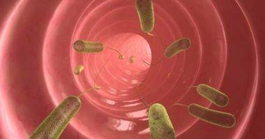 كيف تنتقل الديدان لأمعاء طفلك 3 أنواع تعرفى عليها وعلى طريقة علاجها اليوم السابع