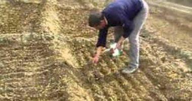 الزراعة: نستورد 98% من تقاوى الخضر.. وخطة جادة لإنتاجاها محليا