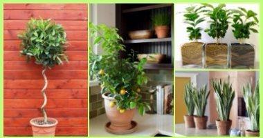 بالصور 10 نباتات ممكن تزرعيها فى البيت وهتنقى الهوا اليوم السابع