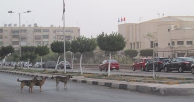 شكوى من انتشار الكلاب الضالة فى شارع الأصبغ بالزيتون