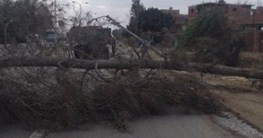 سوء الأحوال الجوية يتسبب في اقتلاع شجرتين بسوهاج والمرور يعيد حركة السير