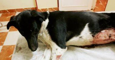 بعد اغتصاب كلبة.. تعرف على عقوبة الاعتداء على الحيوانات فى القانون المصرى