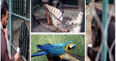 حديقة حيوان الجيزة تفتح أبوابها للزوار غدا بعد غلقها 6 أشهر