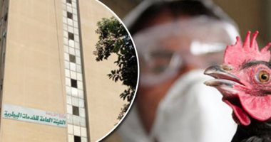 10 علامات توضح إصابة الدواجن بأنفلونزا الطيور.. تعرف عليها